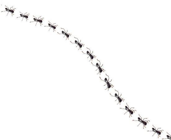 Как навсегда избавиться от муравьев в доме?